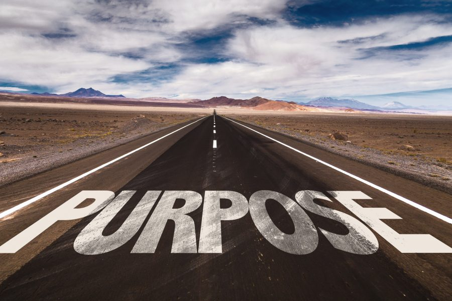 Your Business Has Purpose. Now What?